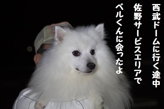 IMG_66842010.jpg