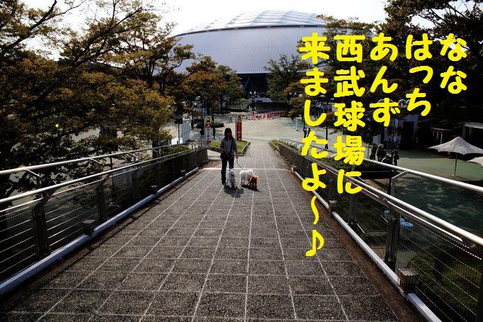 IMG_67612010.jpg