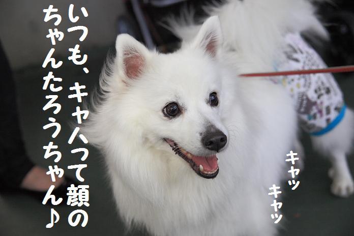 IMG_71452010.jpg