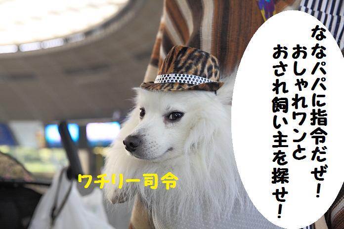 IMG_71532010-111111.jpg