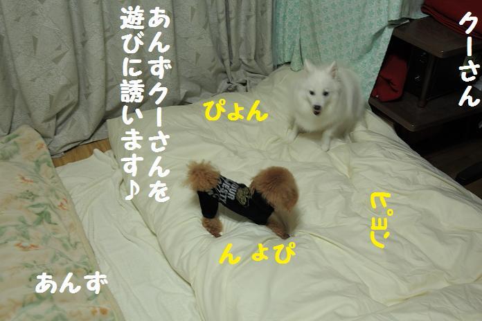 IMG_73912010.jpg