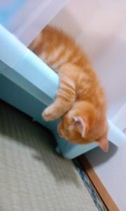 ウンコで疲れました