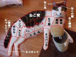 解体新書(猫)