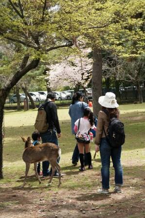 奈良公園 020