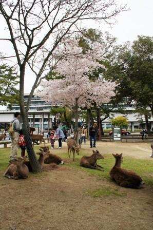 奈良公園 052