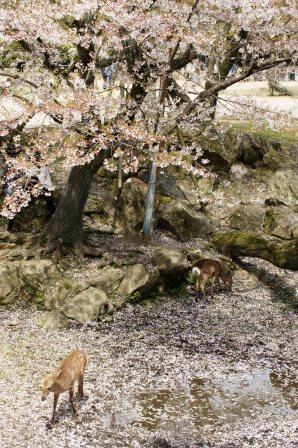 奈良公園 082