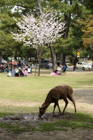 奈良公園 033