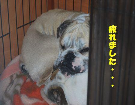 DSC_0096_20130414193441.jpg