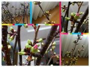 20120401桜