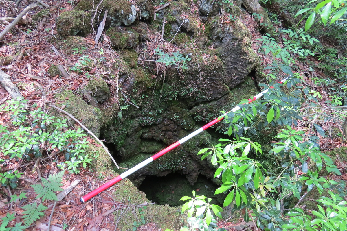 IMG_2860溶岩樹形a