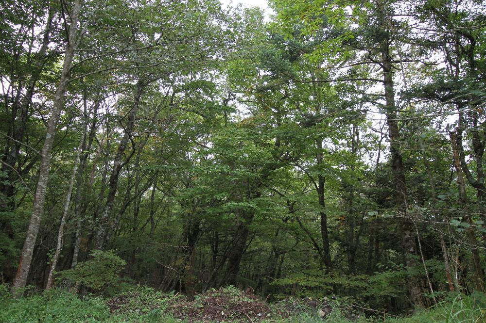 IMG_7539南麓樹林
