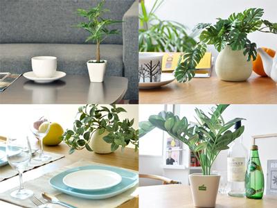 光触媒人工植物 アロカシア