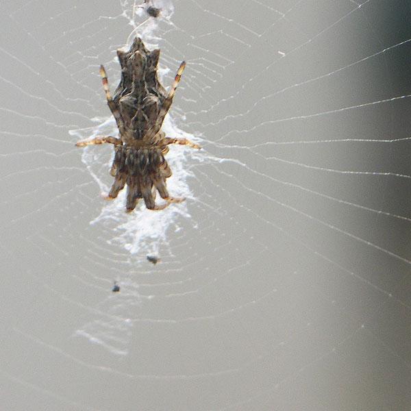 いか蜘蛛3