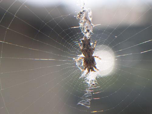 いか蜘蛛5