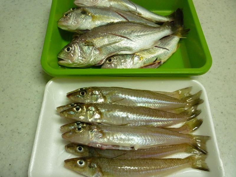 獲れ立ての魚