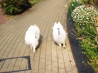 並んで散歩2