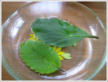 mother leaf