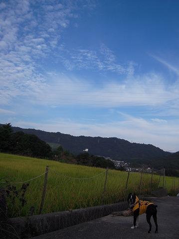 DSCN9772_20111006194600.jpg