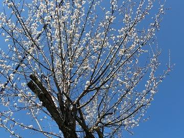 mone春