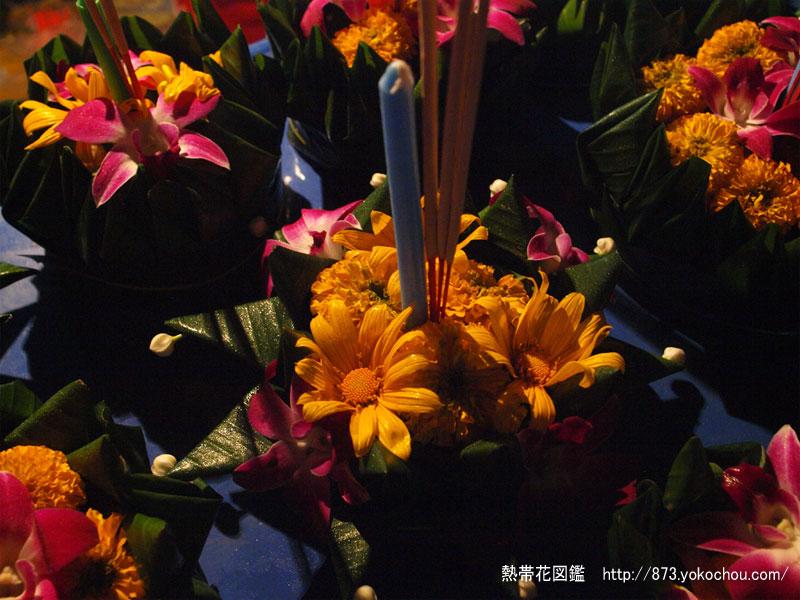 ガーベラの花灯篭 - ロイクラトン