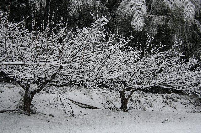 雪 雪 大雪4