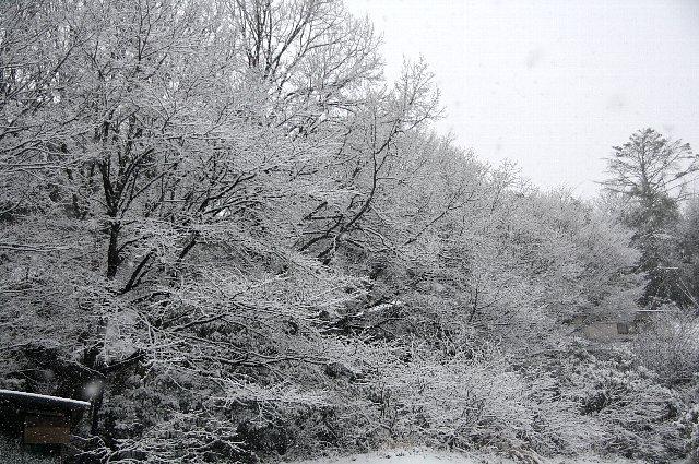 雪 雪 大雪5