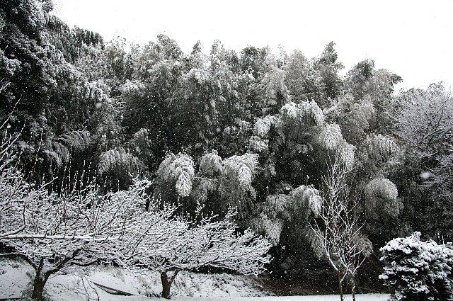 雪 雪 大雪3