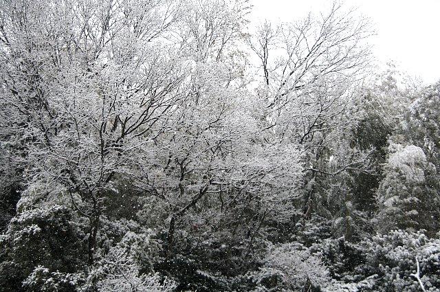 雪 雪 大雪2