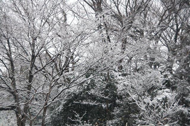 雪 雪 大雪