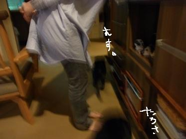RIMG005320110921.jpg