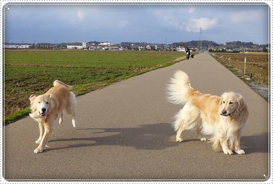 2014,2,18お散歩2