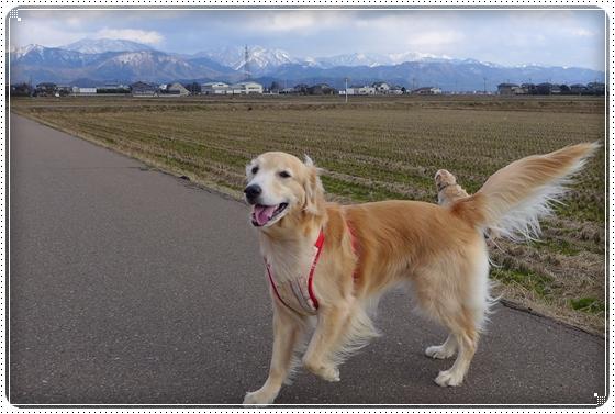 2014,2,21お散歩8