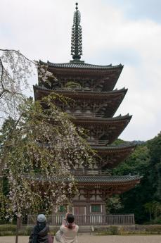 2012_sakura-1.jpg