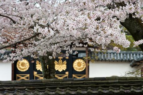 2012_sakura-9.jpg