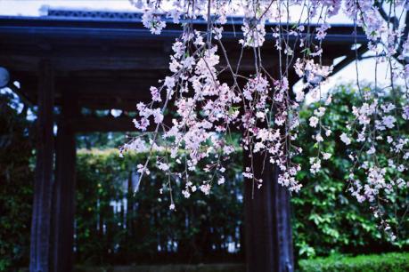 miyousinji-5.jpg