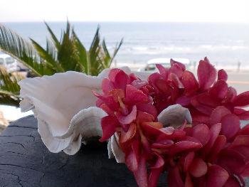 花とサンゴ_copy