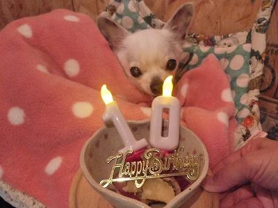たんぽぽチャン/Happy Anniversary