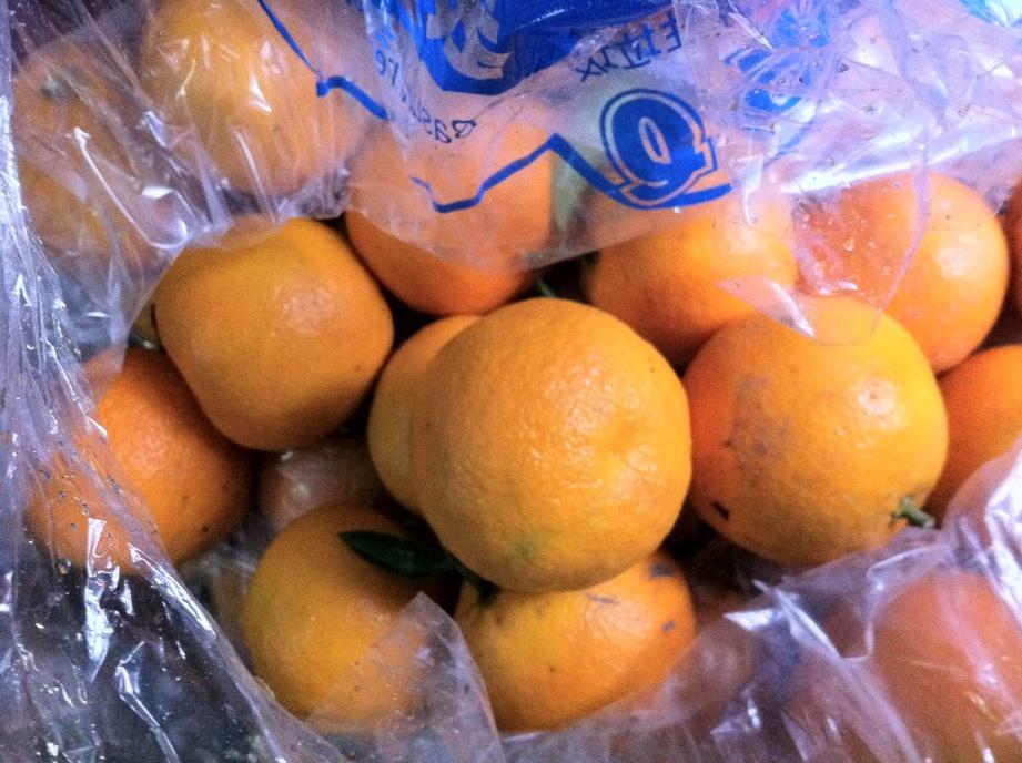 IMG_0415柑橘