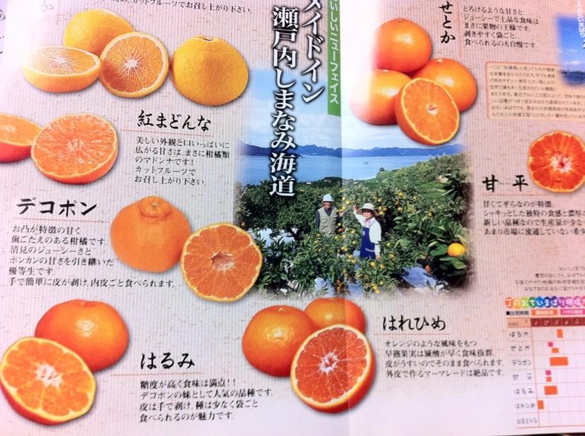 IMG_2409柑橘