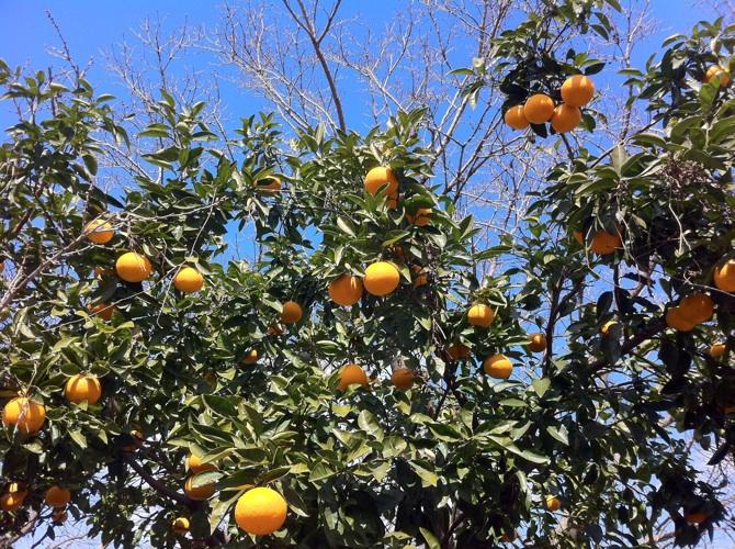 IMG_9370柑橘