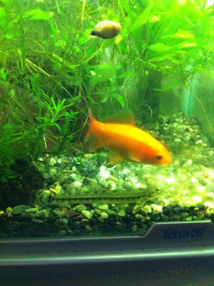 IMG_2254金魚