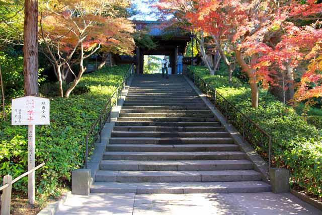 kouyounokamakura2