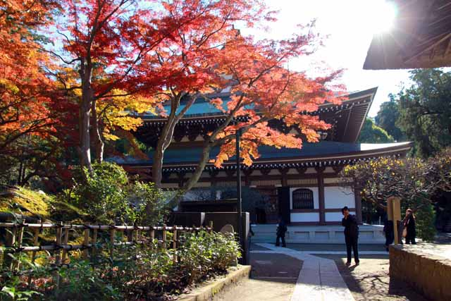 kouyounokamakura10