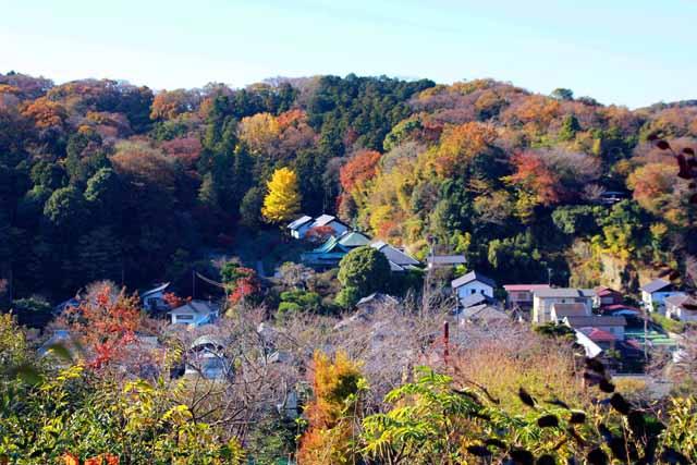 kouyounokamakura17