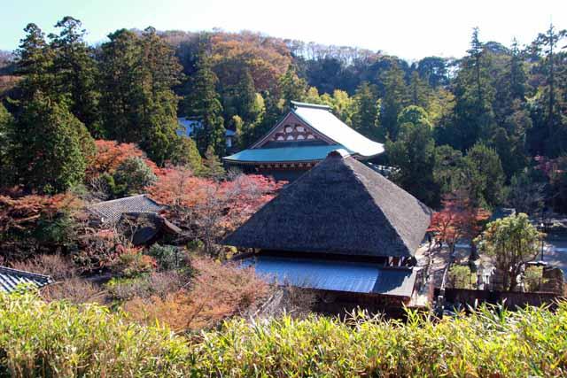 kouyounokamakura21