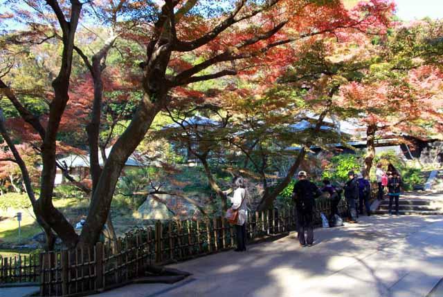 kouyounokamakura22