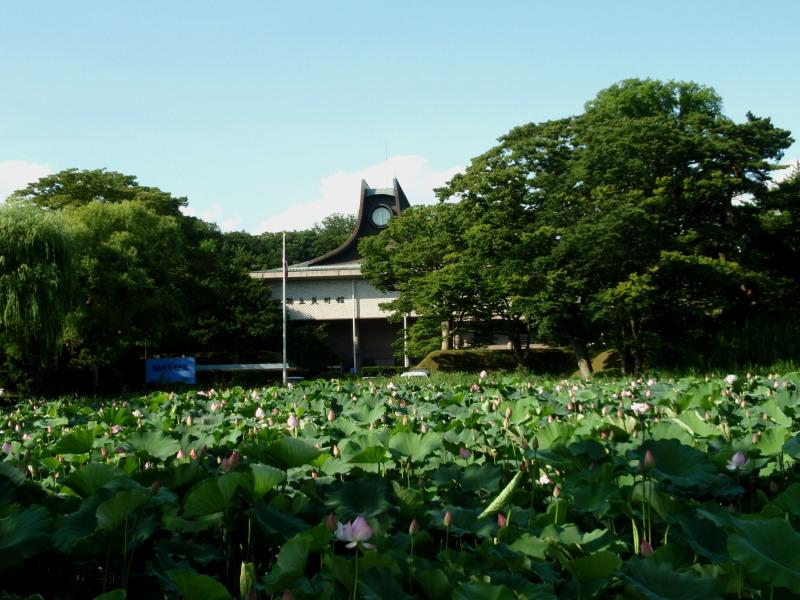 P1010477 蓮の花と千秋公園800x600.jpg