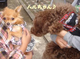 DSC04069_convert_20111013083549.jpg