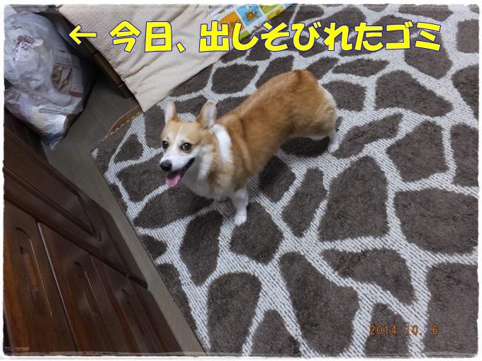 10-5DSCF3618.jpg