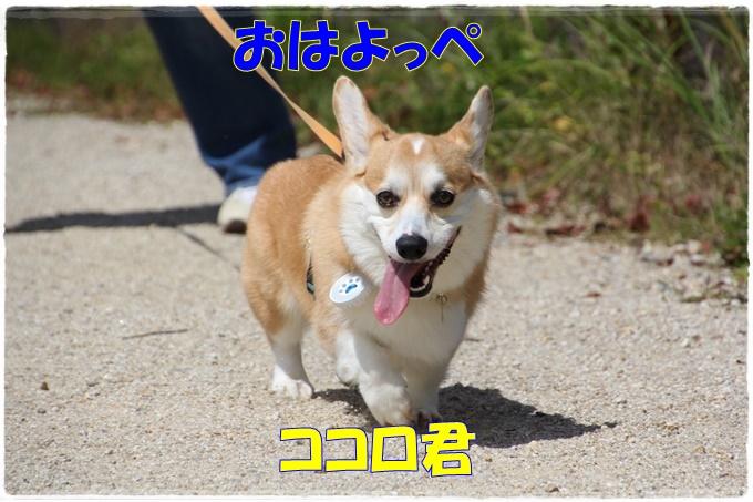 9-240010_xlarge1.jpg